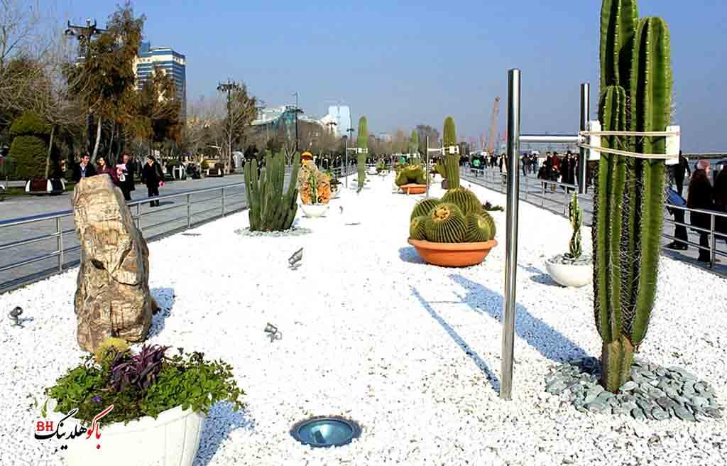 تصویری از گیاهان بلوار باکو